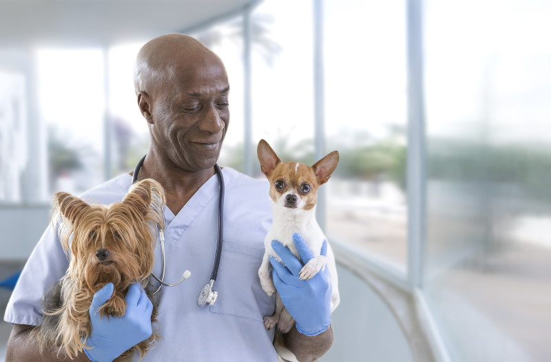 DVM vet with 2 dogs at pet clinic